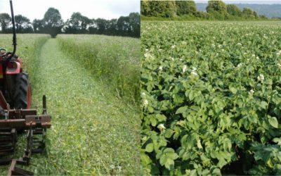 FORMATION : Légumes plein champs & Réduction du travail du sol