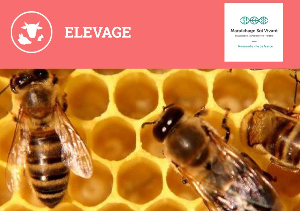 FORMATION MIEL – 27&28 avril 2020 – Diversifier son activité : Conduite d'un rucher