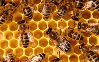 FORMATION MIEL Diversifier son activité : Conduite d'un rucher