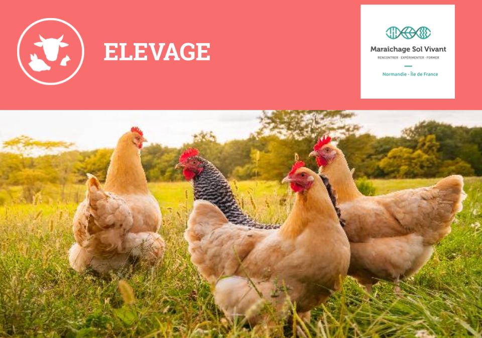 Formation : Gestion d'un atelier poules & poulets alternatif – Mardi 26 Novembre (Livarot – 14)